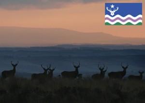 Exmoor Flag Postcard Stags